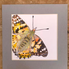 'The Painted Lady'