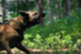 Protection Dog Training NJ PA NY