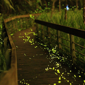 2019 日月潭星光螢火蟲季Sun Moon Lake Fireflies Festival