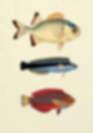 Fisk.jfif