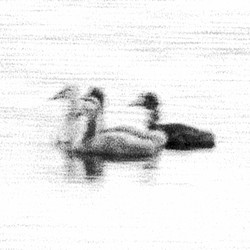 Swan Lights 14