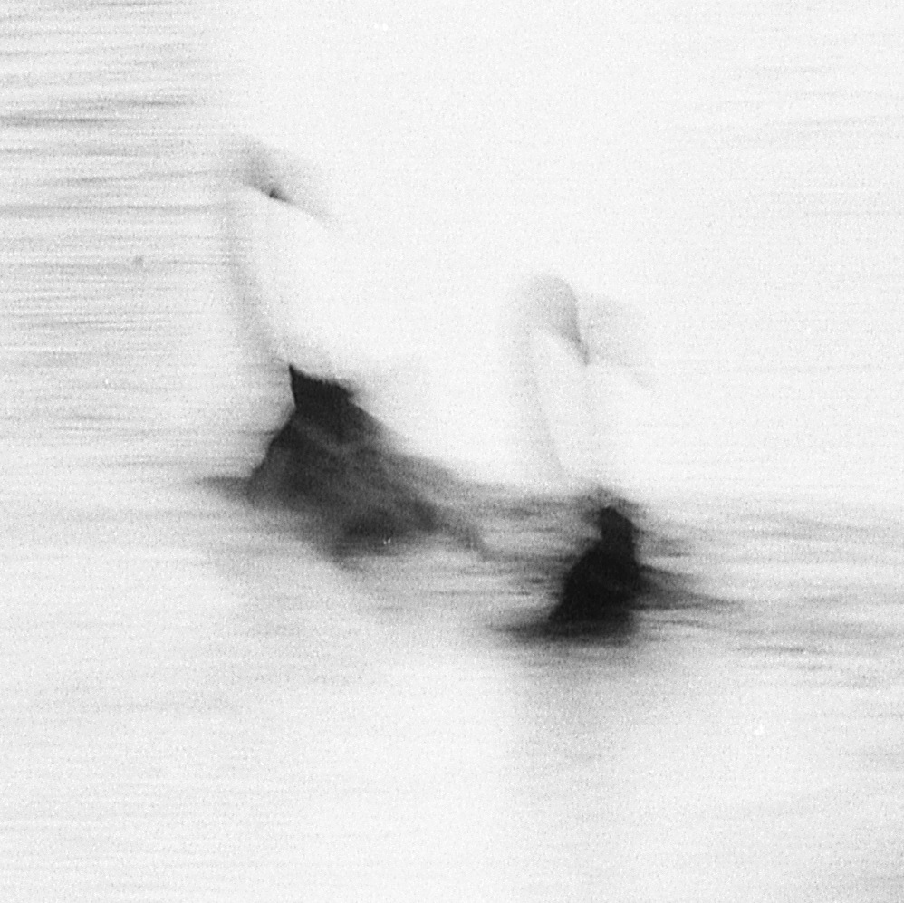 Swan Lights12