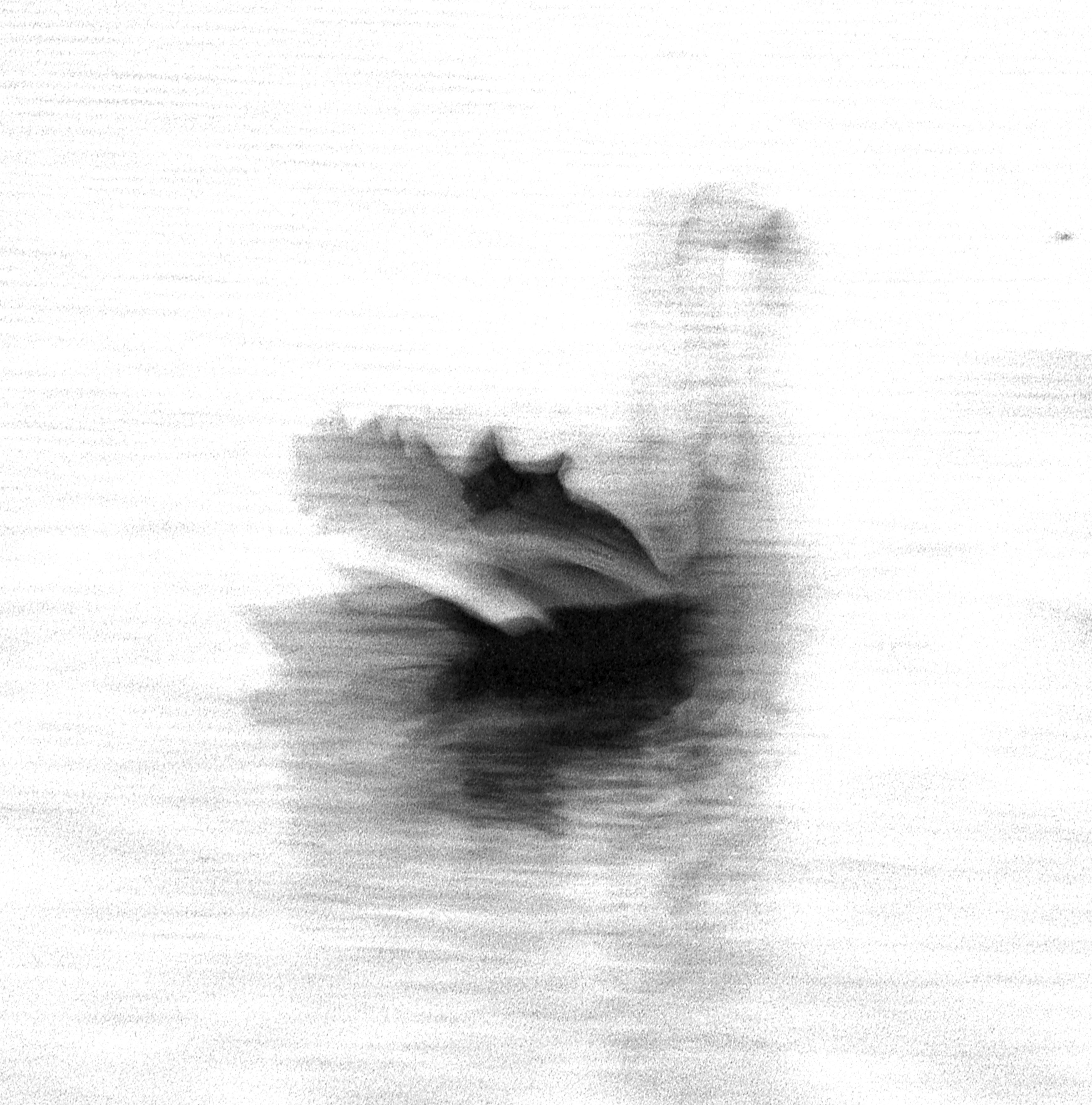 Swan Lights 15
