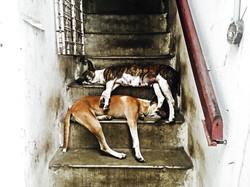 Yangon Still Life 6