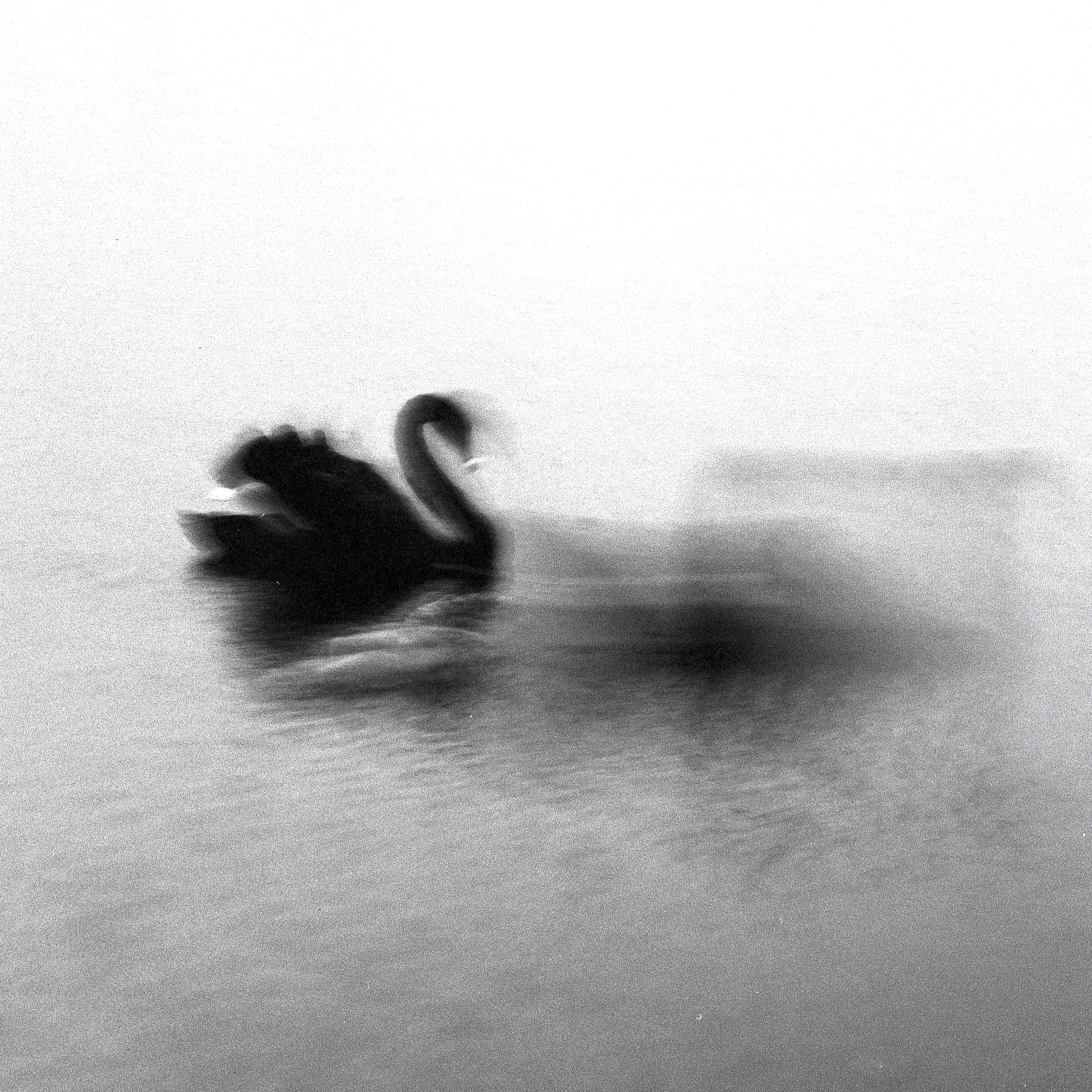 Swan Lights17