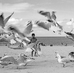 Gulls and boy