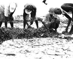 Nyali Fishermen catch