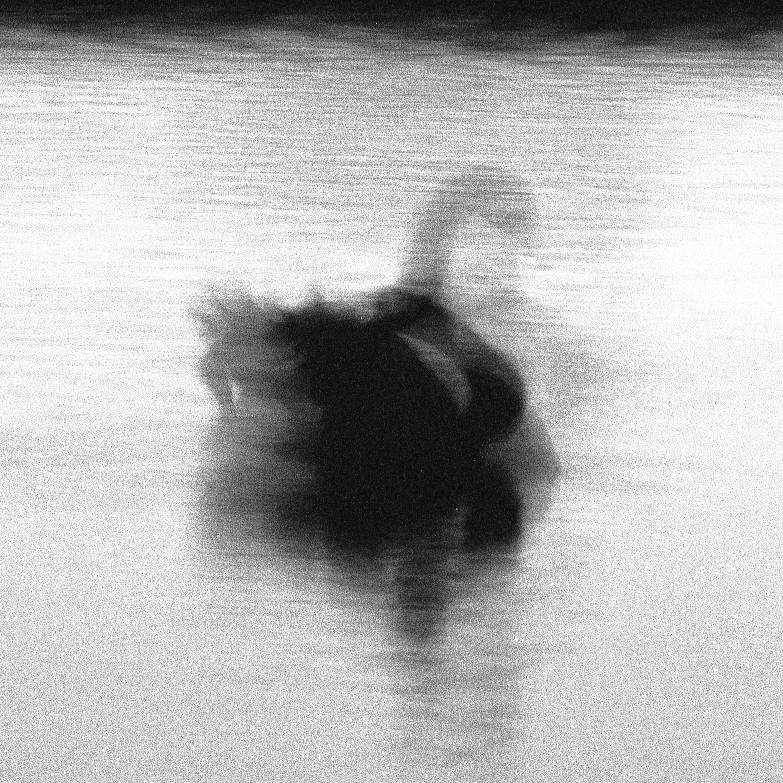 Swan Lights 10