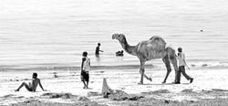 Camel on Nyali Beach