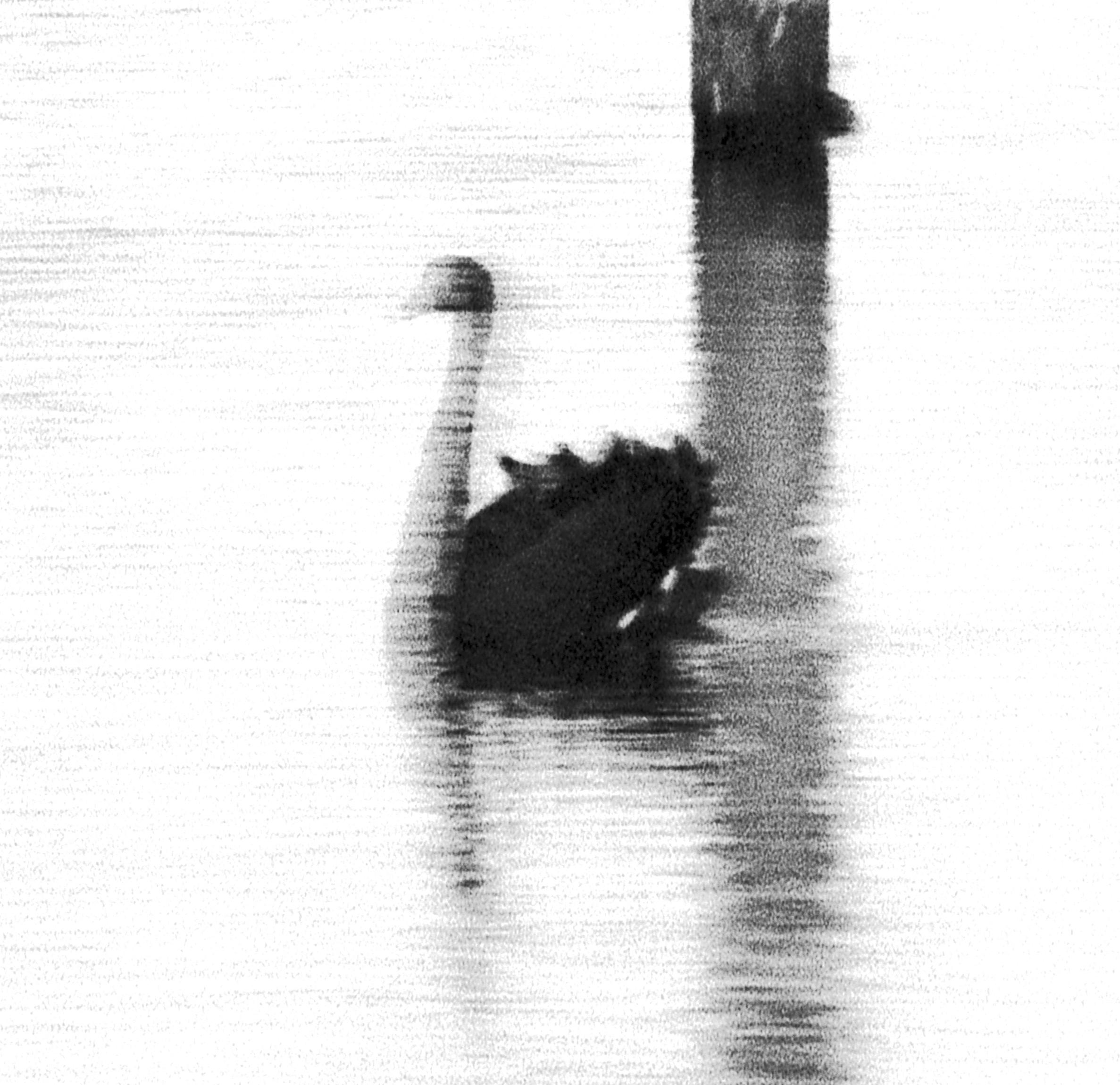 Swan Lights 24