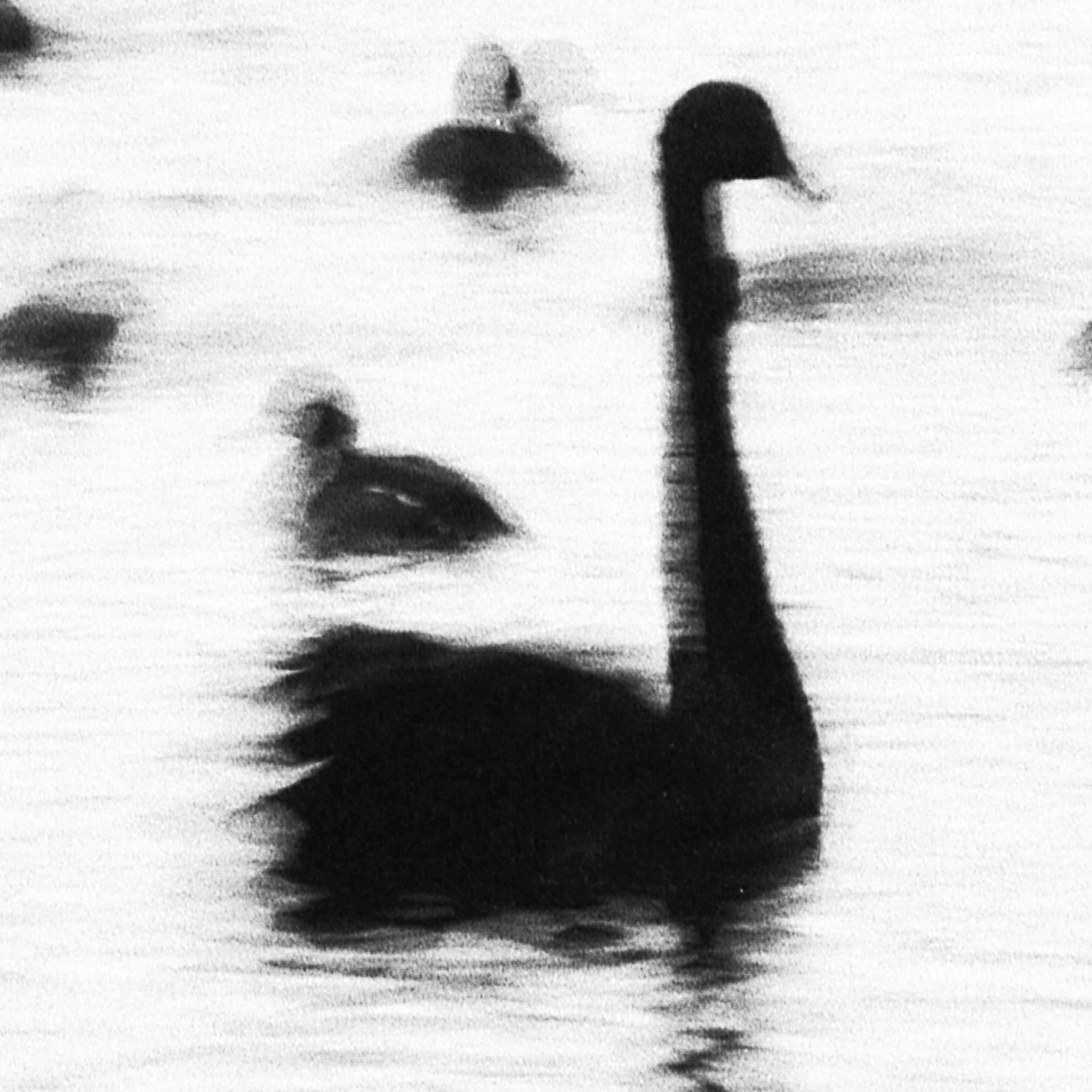 Swan Lights16