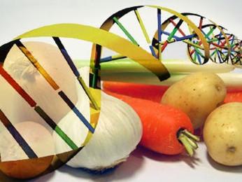 Il cibo e gli OGM: dibattito al Circolo De Amicis