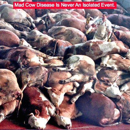 mad-cow-disease