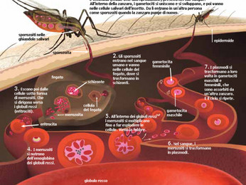Malaria Sardinia project