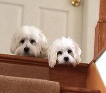 pic of pups_edited.jpg