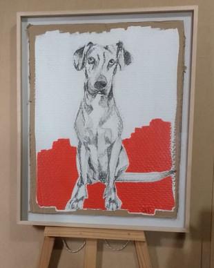 Perro sobre fondo rojo