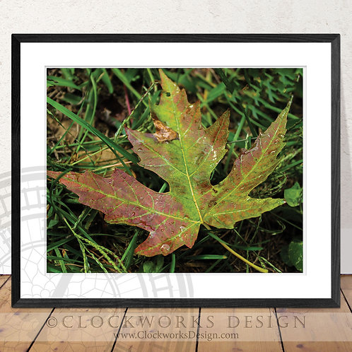 Shades of Autumn | Photography, maple-leaf, fall season,photo, print, home decor