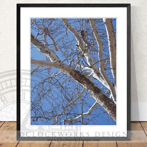 Tranquil Tree | Photography,tree,branches, happy little tree, spring, blue sky