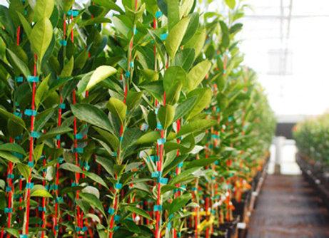 Fiberglass Tree Stakes
