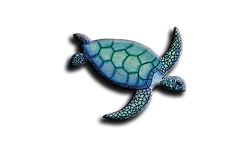 Water with Turtle.jpg