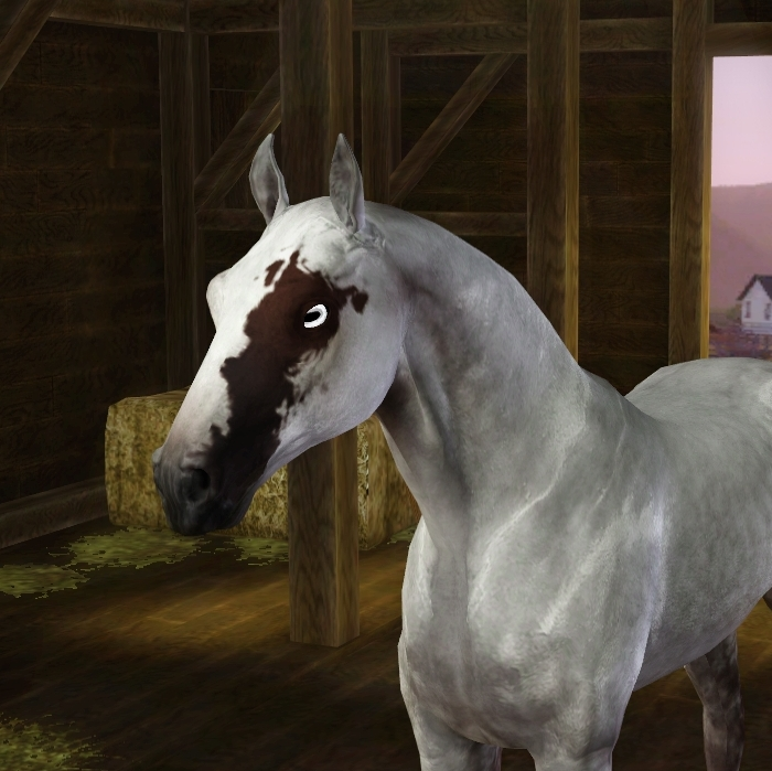 Horse Posesdaruma Fields Saddlery