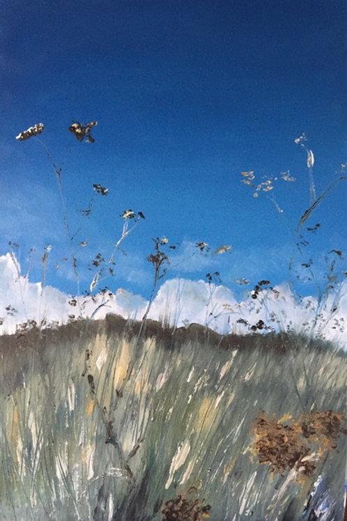 'The light through the grasses' Morston aliums