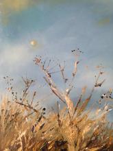 'Daylight moon' Morston aliums