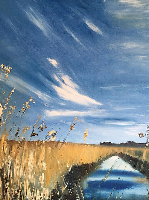 'Feather skies' Salthouse reedbeds