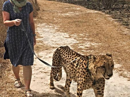 Reinventing - is Cheetah Walker a job title?