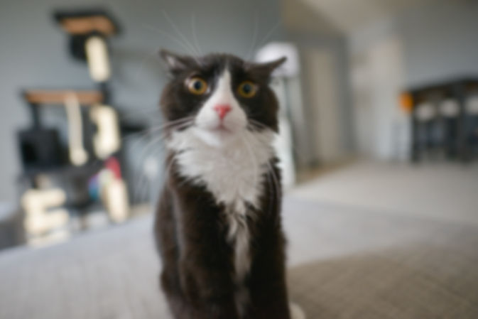 understanding cat behaviour when cat themselves are confused