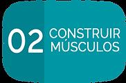 02 CONSTRUIR MUSCULOS.png
