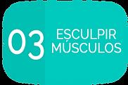 02 ESCULPIR MUSCULOS.png