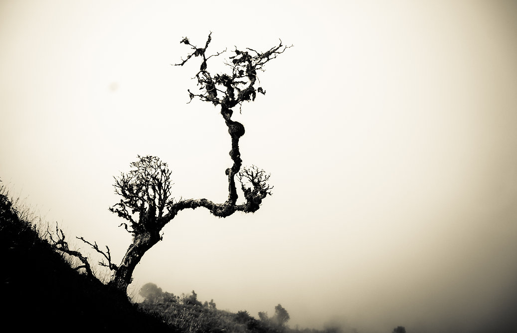 silhouette dry tree on hill - Lonely dea