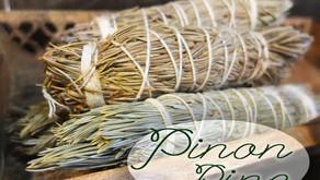Magikcal Spotlight #3 - Piñon Pine
