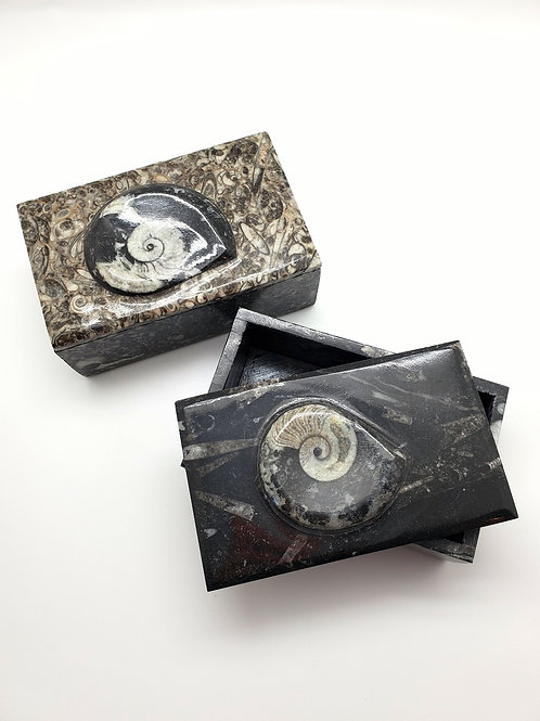 Fossil Boxes
