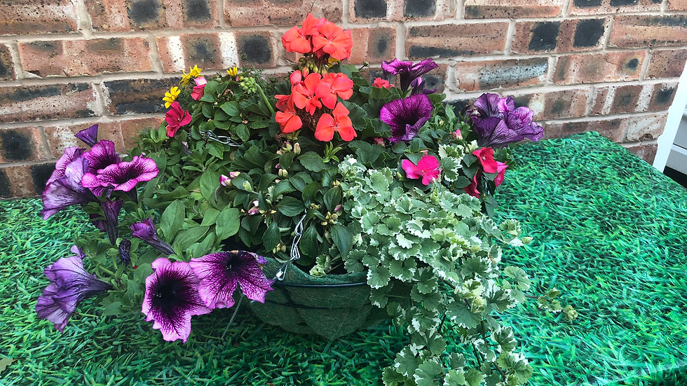 "16"" Mixed Wire Hanging Basket"