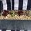 Thumbnail: Sempervivum (Succulents) Trough