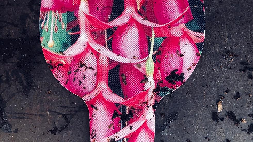 Trailing Fuchsia - Jack Shahan
