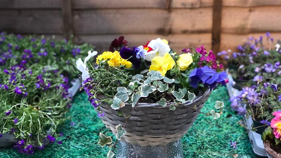 Spring Hanging Basket Replant