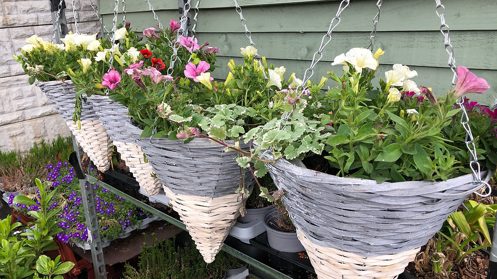"Cone Summer Hanging Basket - 12"" or 14"""