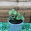 Thumbnail: Strawberry Plants - Elsanta - 2L
