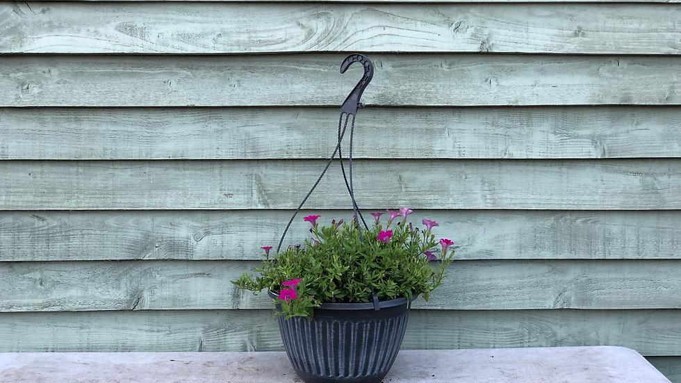 Petunia Hanging Pot