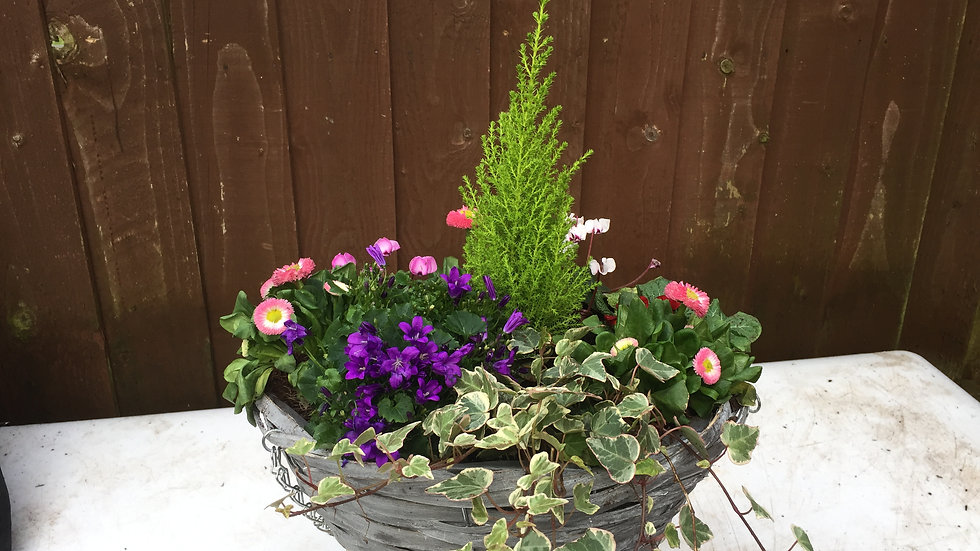 "14"" Hanging Basket - Winter"
