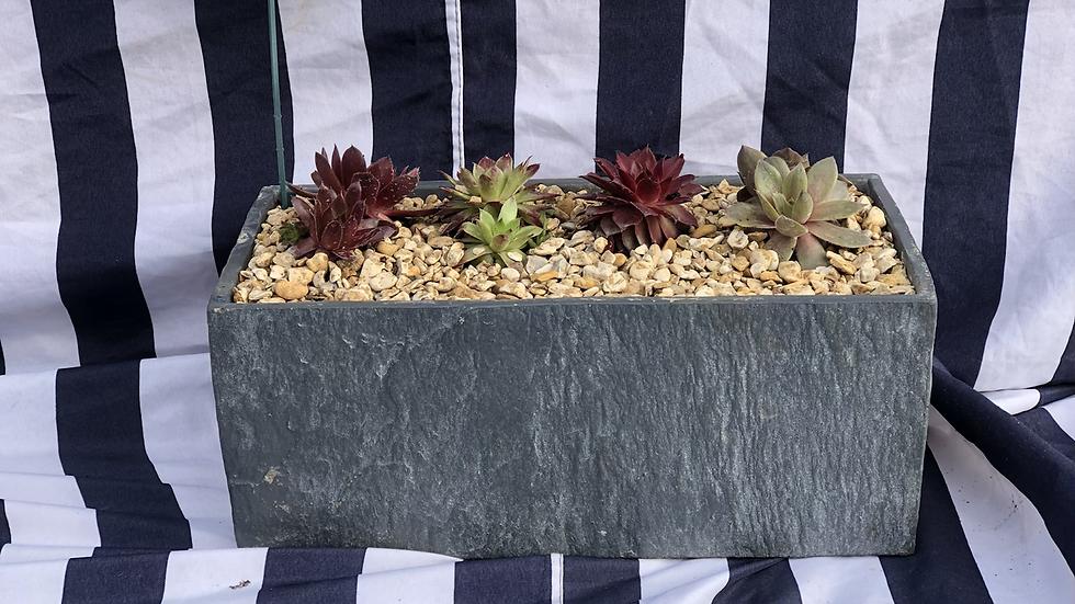 Sempervivum (Succulents) Trough