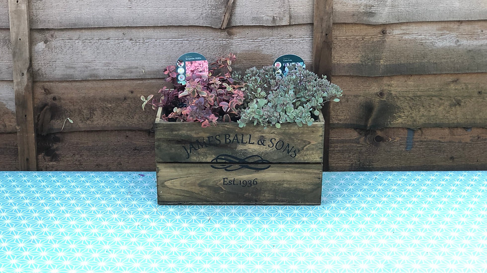 Sedum Planted Container  in a Wooden Crate