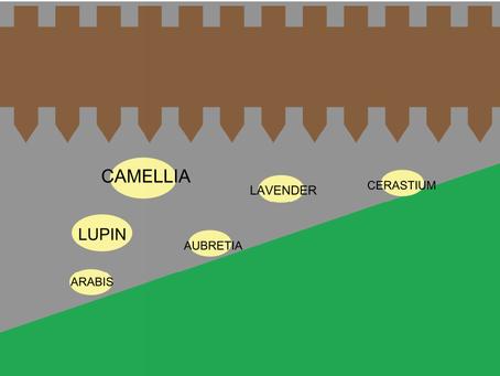 Spring/Summer Border Planning