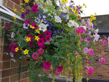 Aftercare for Hanging Baskets and Planted Containers