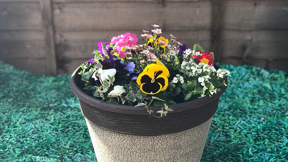 36cm Spring Planted Tub - Brown