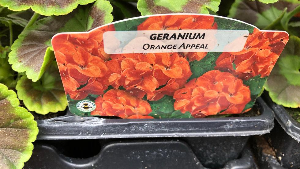 "Geraniums - ""Orange Appeal"" - 4 Pack"