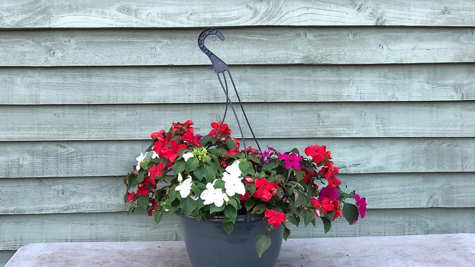 Busy Lizzie Hanging Pot
